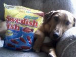 Someone loves Swedish fish!